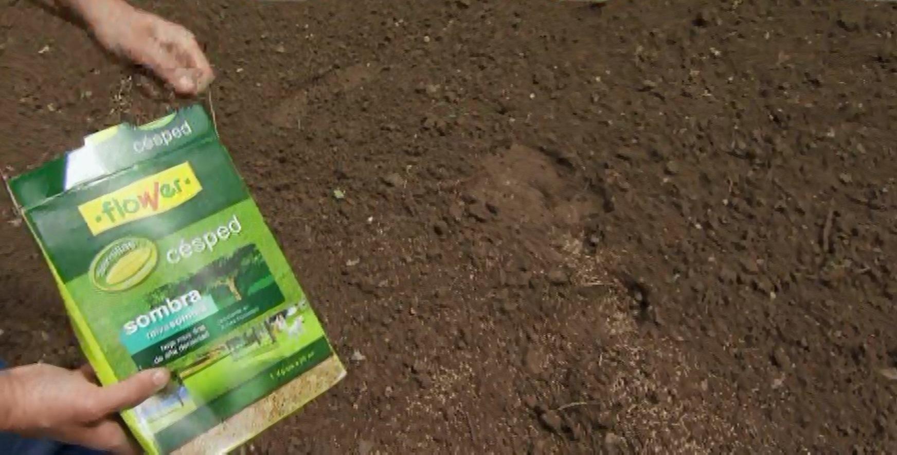 Cuando sembrar el cesped perfect semillas tiposcesped cesped cesped with cuando sembrar el - Cuando plantar cesped ...